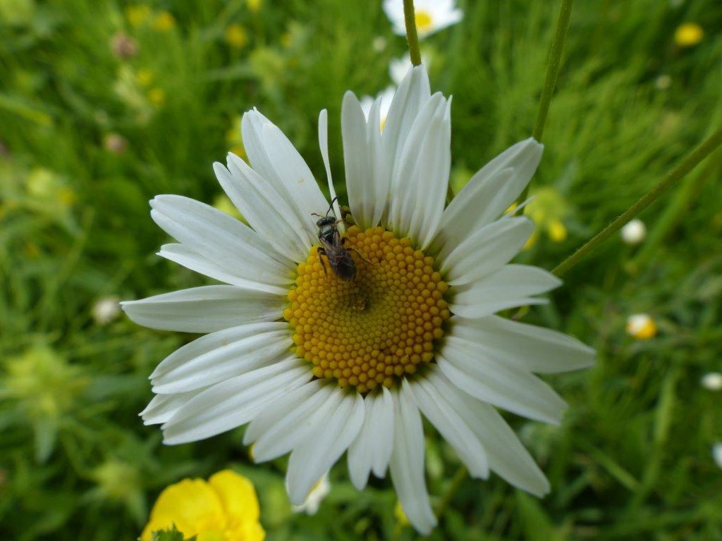 Eco ontwerp  en hoveniersbedrijf : vlinder er bij