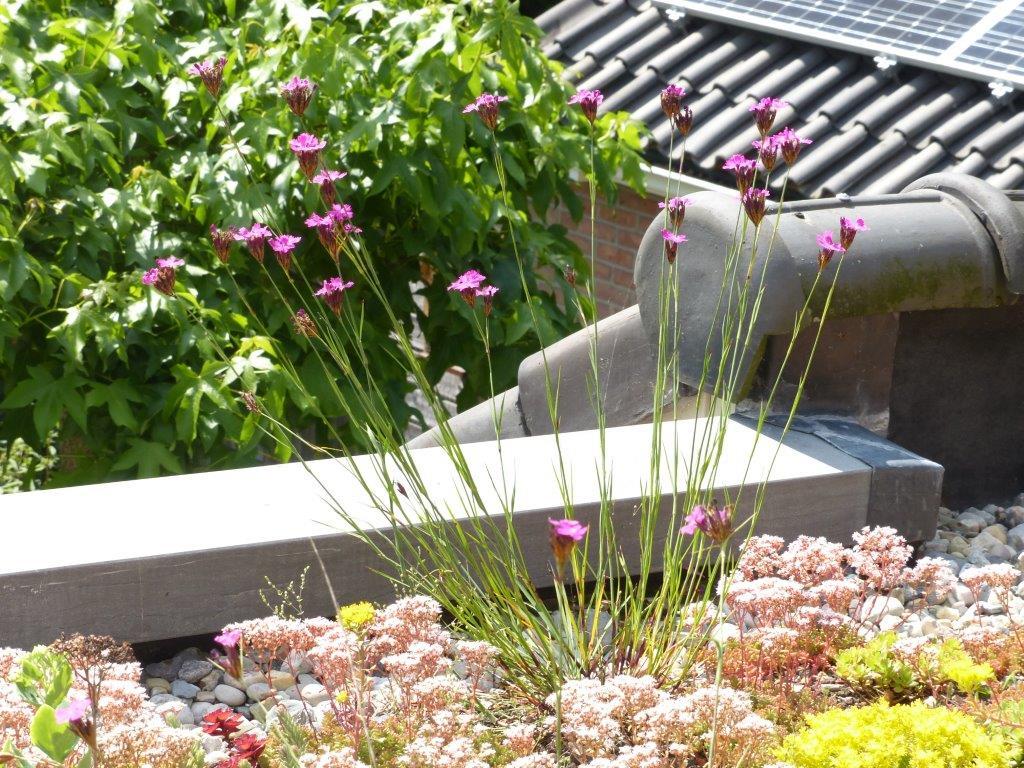 Bestaande tuinen   eco ontwerp  en hoveniersbedrijf: vlinder er bij