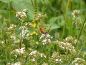 Vlinder er Bij Natuurtion