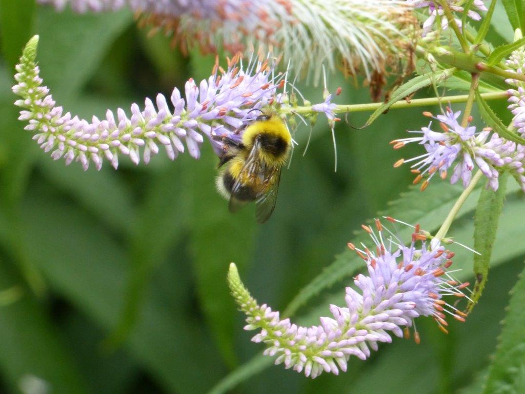 cursus natuurrijk en diervriendelijk tuinieren eco