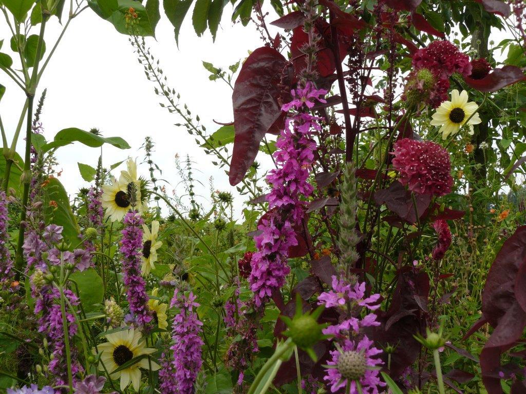 Particuliere tuin   eco ontwerp  en hoveniersbedrijf: vlinder er bij