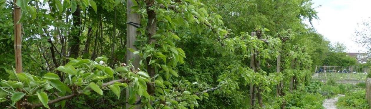 Ecologisch ontwerp, beplantingsadvies en hoveniersbedrijf: Vlinder er Bij Natuurtuin