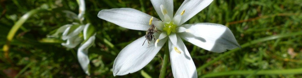 Ecologisch ontwerp, beplantingsadvies en hoveniersbedrijf: Vlinder er Bij