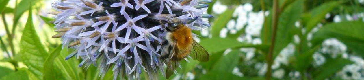 Ecologisch ontwerp, beplantings- en beheeradvies, diervriendelijke natuurtuinen en openbare ruimte: Vlinder er Bij