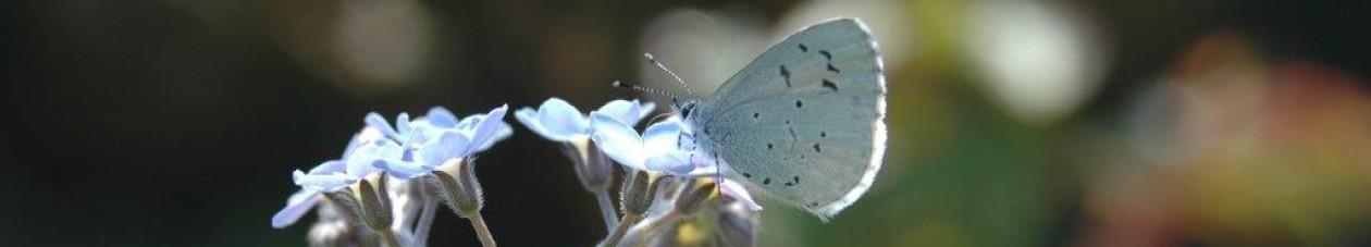 Eco ontwerp- en hoveniersbedrijf: Vlinder er Bij